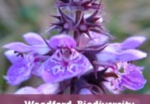Woodford Biodiversity Action Plan