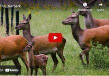 The Deerpark, Loughrea